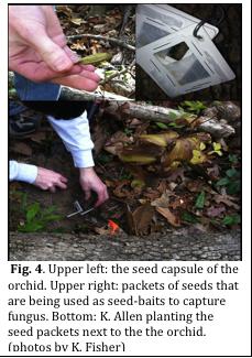 Fig_4_seed_packs