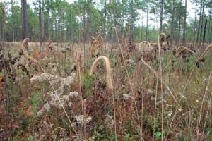 Fig. 2 native vegetation sample