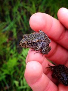 Fig. 5 frog