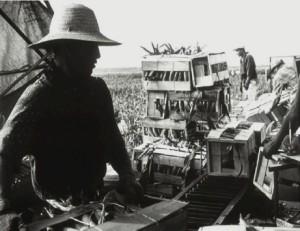 Fig. 5 worker in field