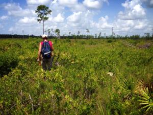 Fig. 6 vegetation monitoring